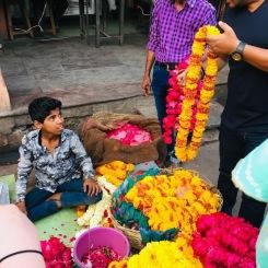 Jaipur 4